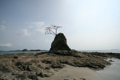 playa_prieta_guanacaste_costa_rica_lone_tree.jpg