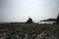 playa_prieta_guanacaste_costa_rica_rocky_shore_tree.jpg